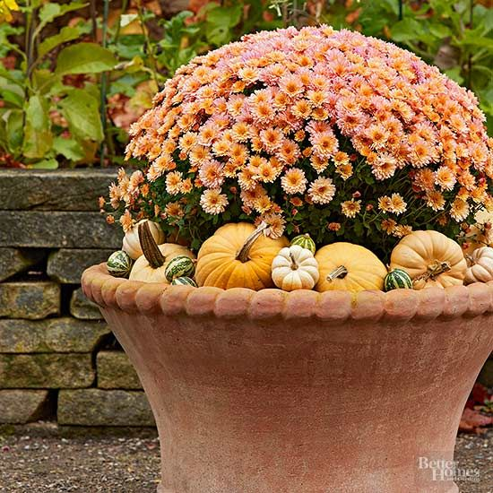 Exceptional Carry Your Potted Flowers Into Fall With This Super Easy Autumn Decorating  Idea. Small Pumpkins