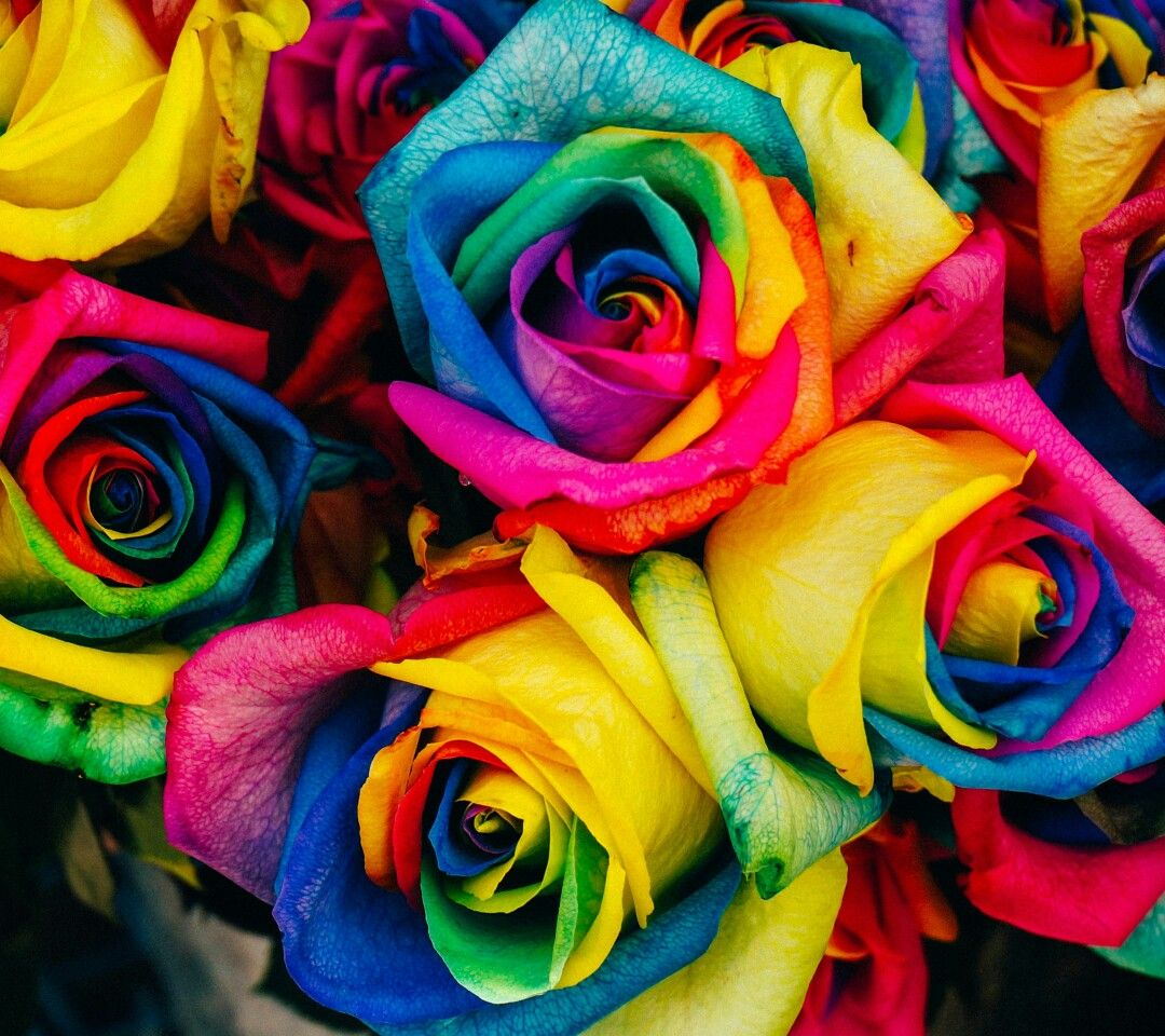 Roses are red violets are blue these flowers are colorful just like roses are red violets are blue these flowers are colorful just like you izmirmasajfo Images