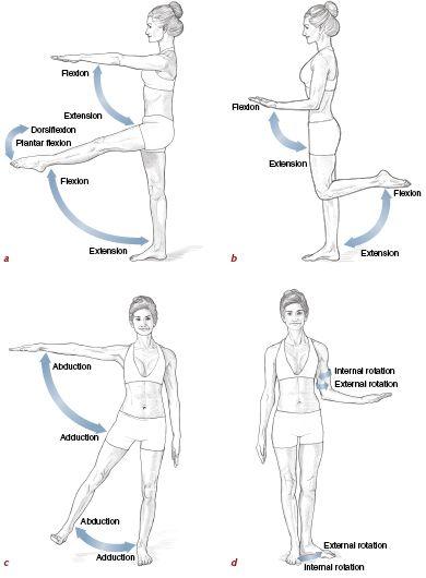 Pilates Anatomy | Pinterest | Anatomía, Fisioterapia y Medicina