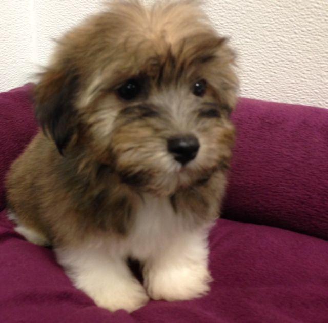 Petland Novi Petland Blog Puppies Cute Puppies Dog Health Tips