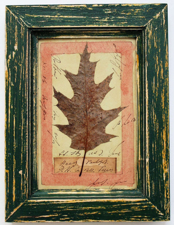 Herbarium, Rustic wood frame, framed pressed flowers, real flower ...