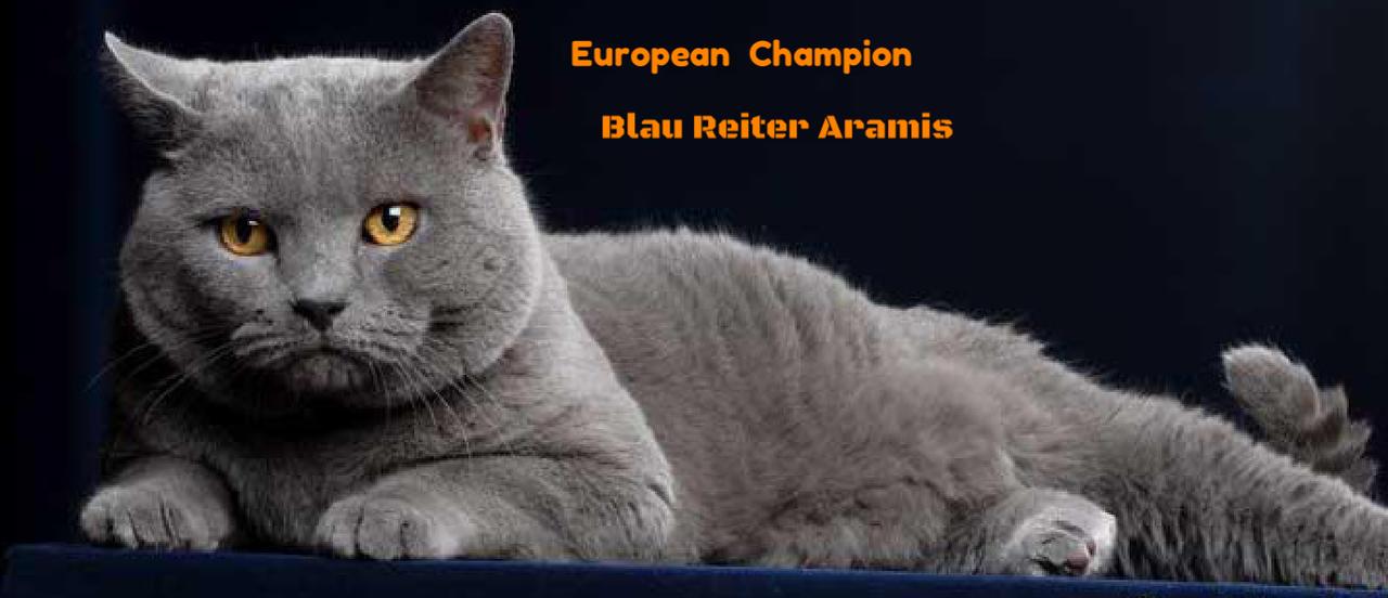 Video Di Aramis Blau Reiter Blau Reiter Certosini Della Conca D