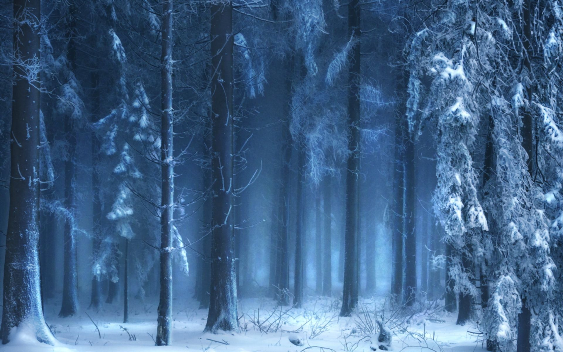 Landscapes trees forest woods winter snow wallpaper | 1920x1200 ... for Fantasy Winter Forest Wallpaper  555kxo