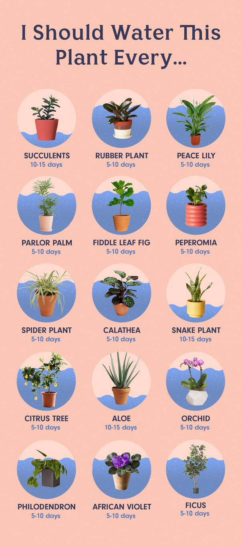How To Water The 15 Most Popular Houseplants Plants Water Plants Indoor Plants