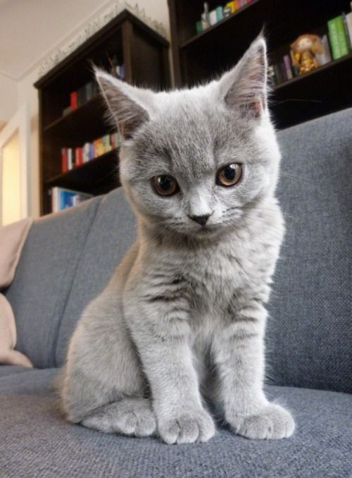 You are a sweet beauty little kitty!