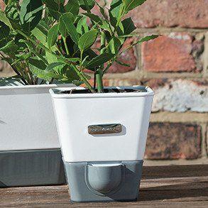 Cole Mason Indoor Herb Garden Self Watering Carbon Steel 400 x 300