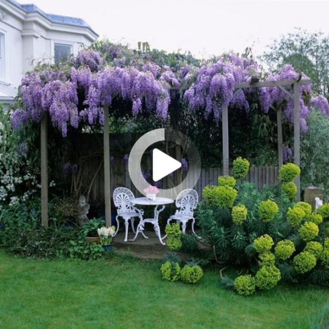 Superbes Plantes De Jardin De Glycine Glyzinie Gartenpflanzen Lila Bluten