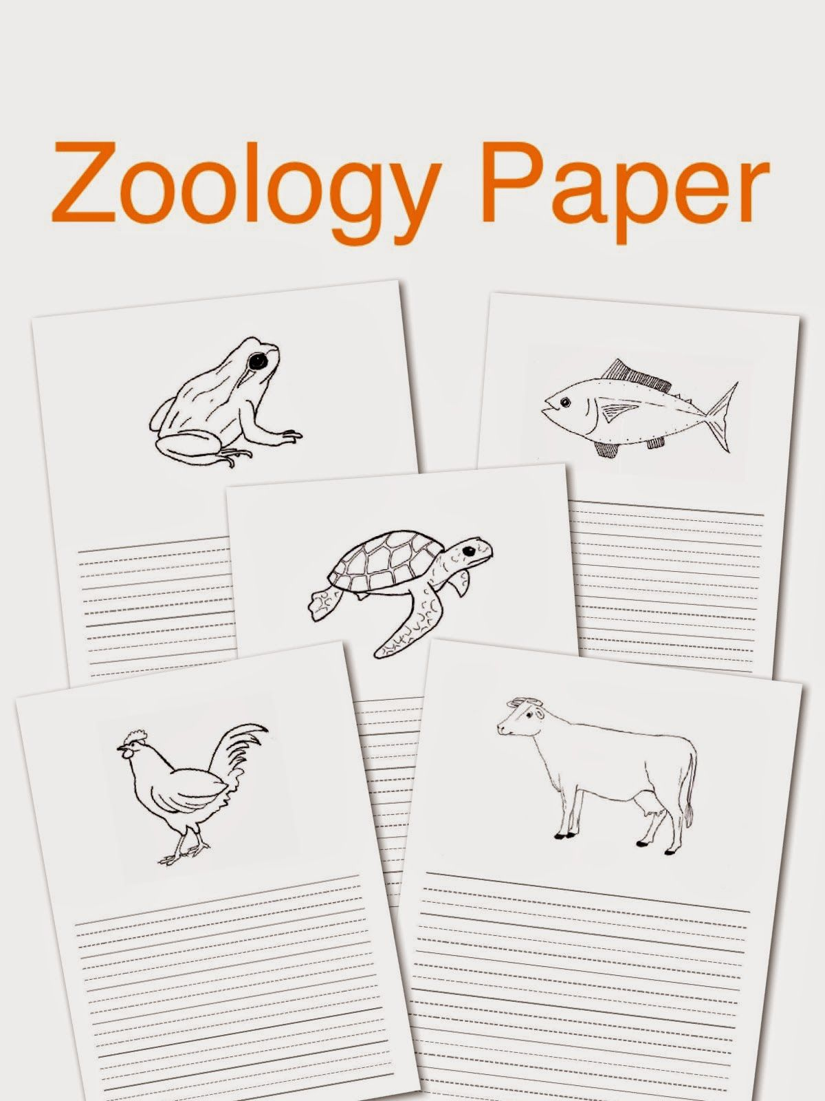 Elementary Observations Project Paper
