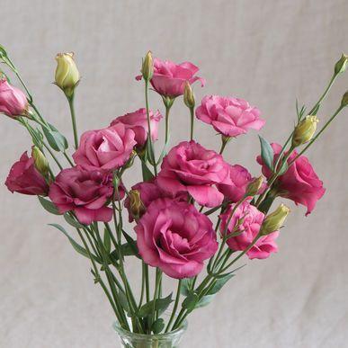 Arena Iii Red Pelleted Lisianthus Seeds Eustoma Grandiflorum Free Bonus 6 Variety Seed Pack A 30 Value Flower Pots Flower Pot Design Lisianthus