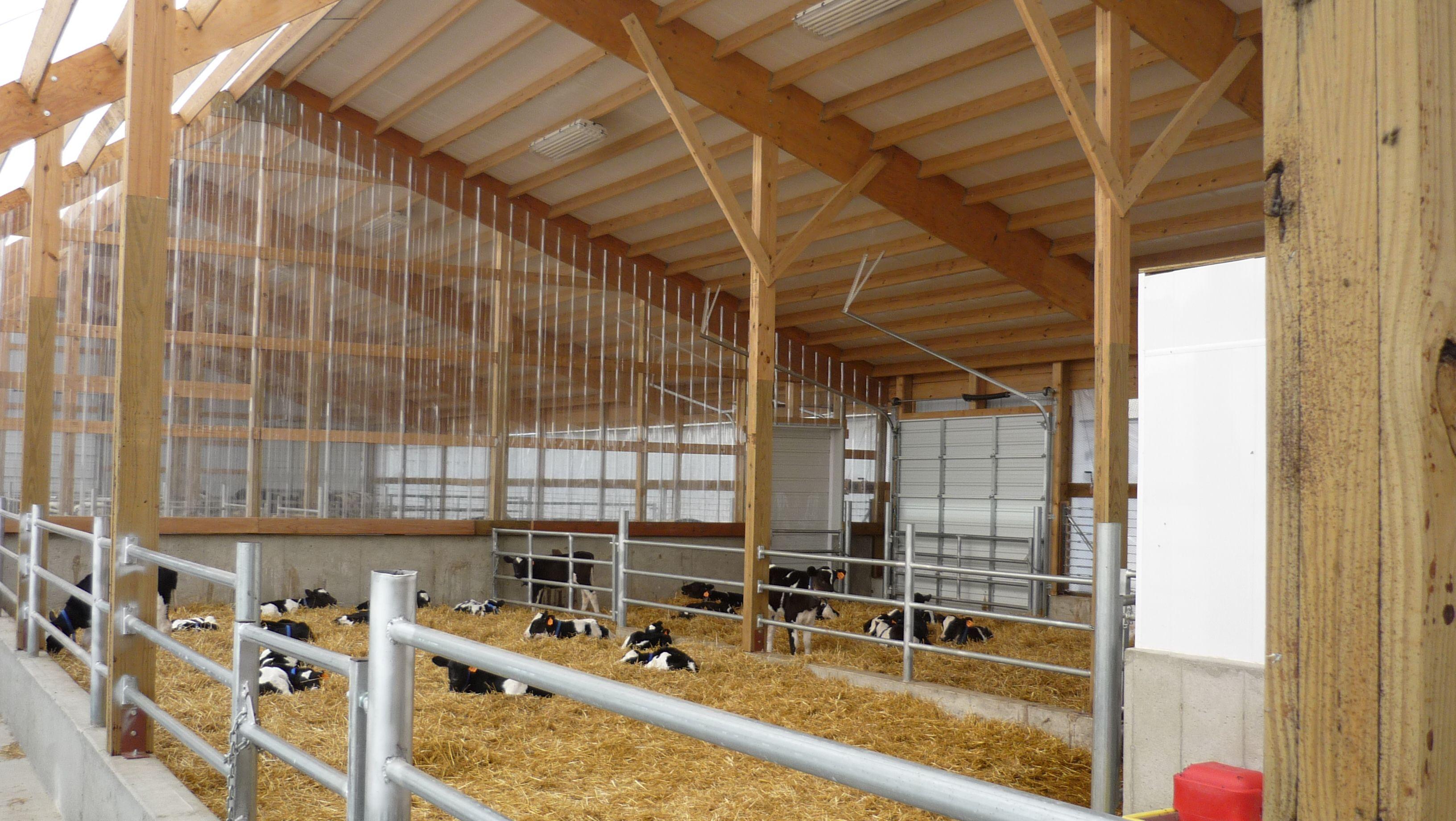 Inside The Progressive Calf Barn In Lake Mills Wi Barn Layout