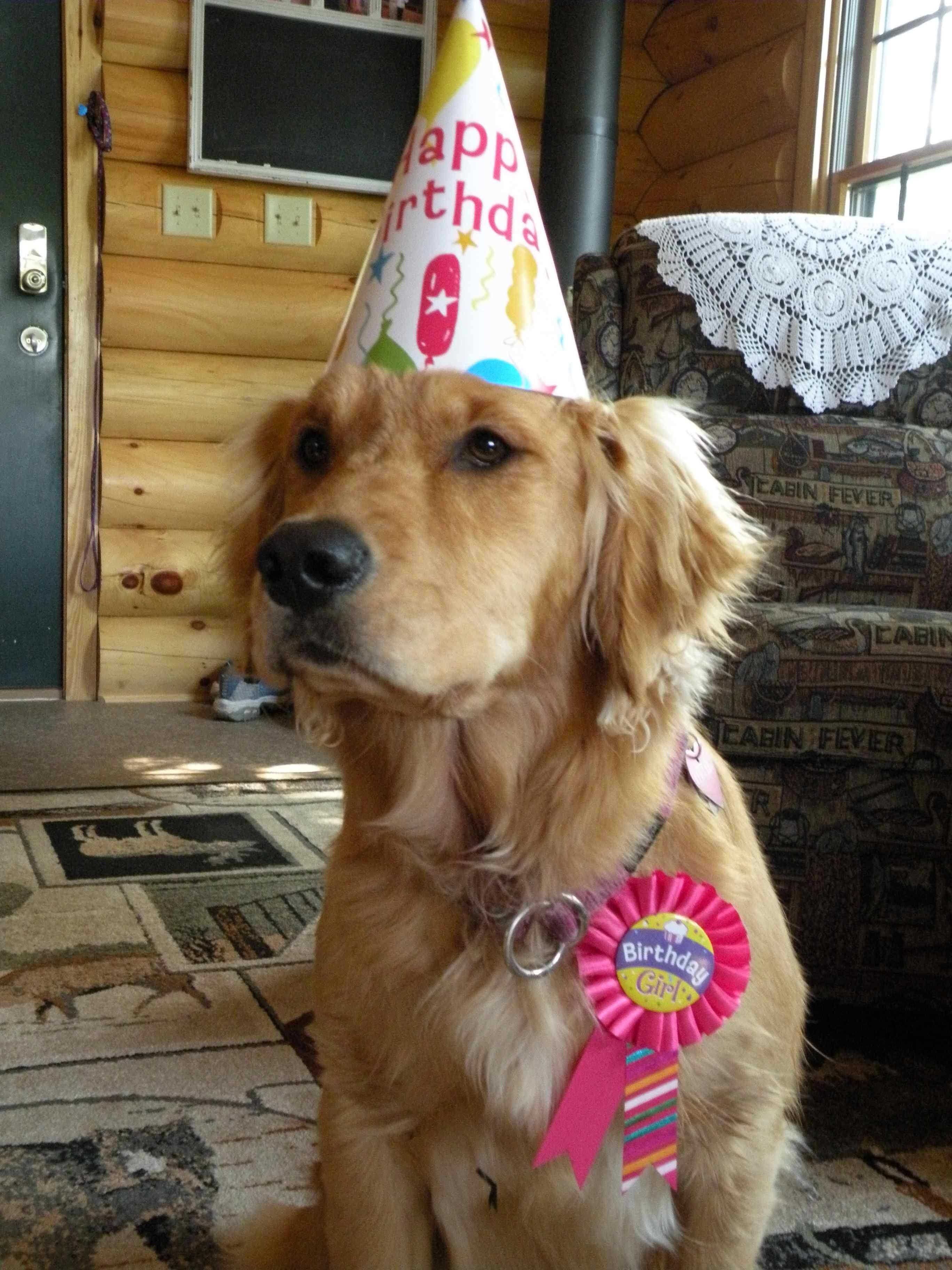 Dogs have birthdays too ya know Perritos