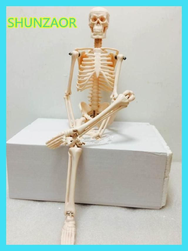 Fexible 45cm Human Anatomical Anatomy Skeleton Model Medical