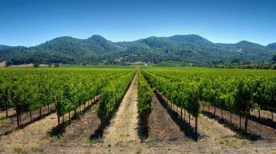 Chile: Viñedo, Variedades y Clima - Aprender de Vino ...