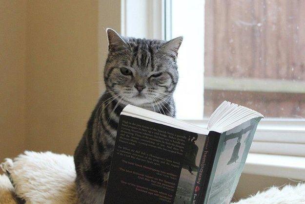 "Go away, I'm reading Purrnest Hemingway."" | Cat reading, Cat books, Cats"