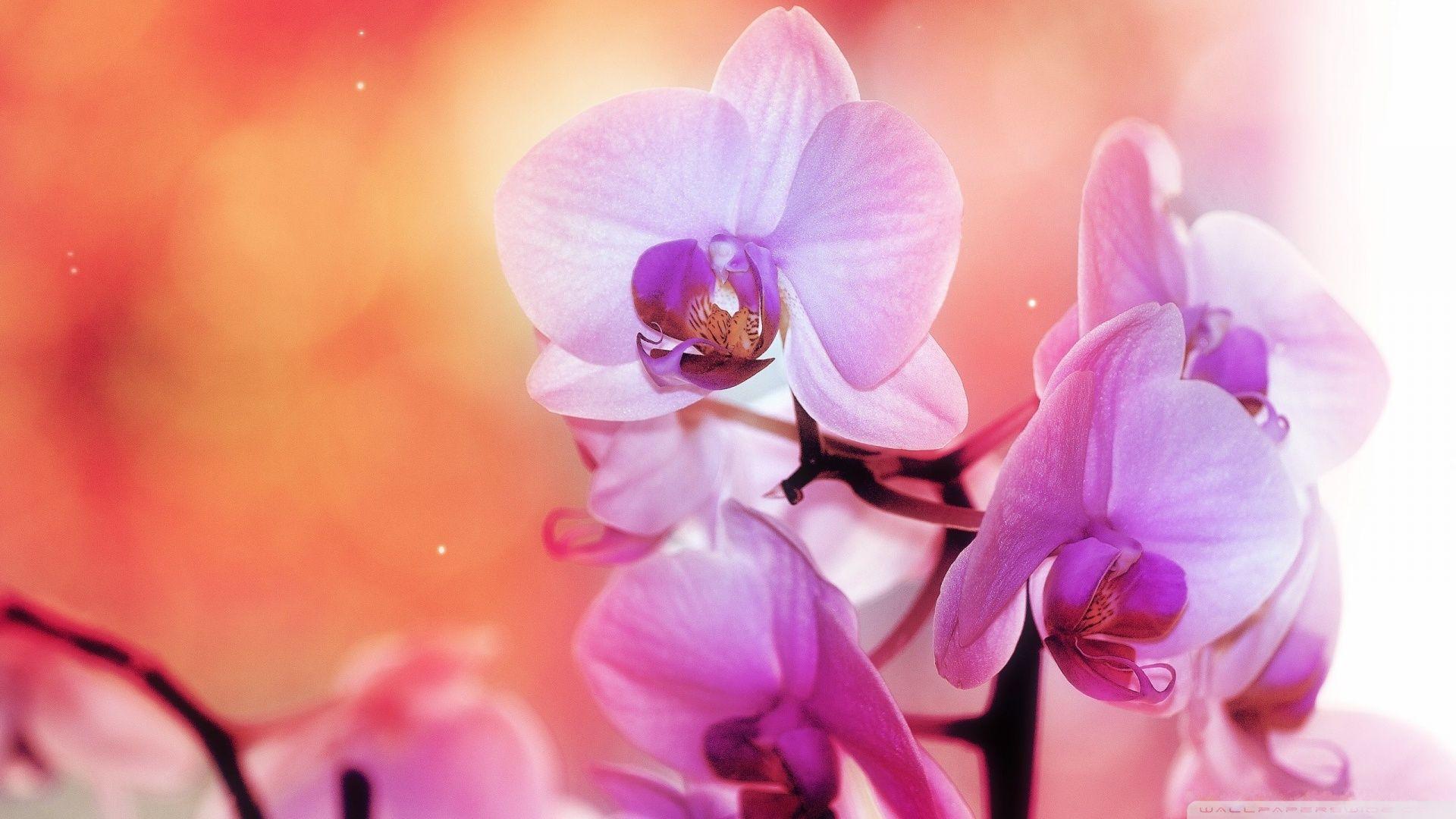 Best 25  Orchid wallpaper ideas on Pinterest   Screensaver, Phone ...