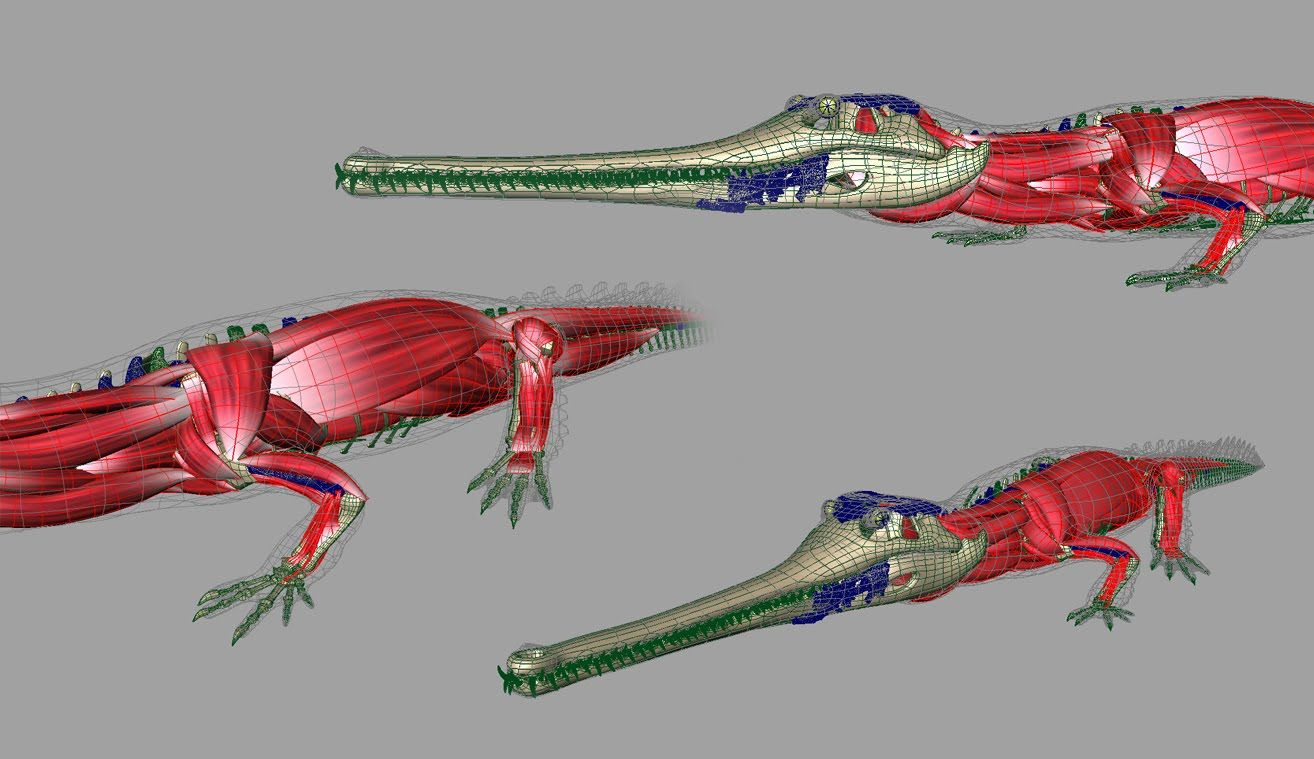 Crocodile Anatomy Skeleton Cerca Con Google Pinterest