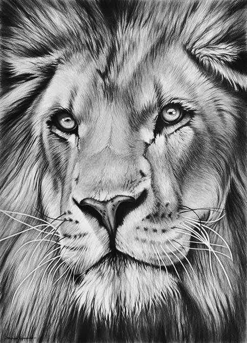 Lion Realistic Drawing : realistic, drawing, Angelique, Tessel, Cosas...cosas...cosas....., Wildlife, Realistic, Drawings,