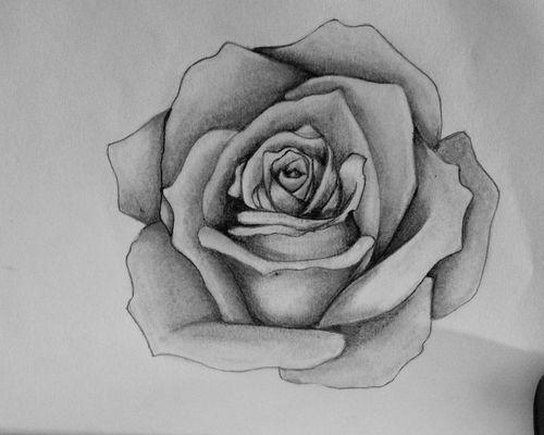 Rose Drawing On Deviantart Tm Vi Google Hoa L Cnh Pinterest Drawings Tattos