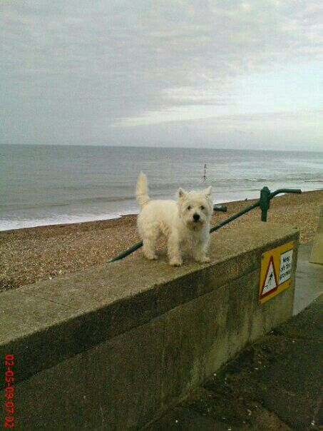 My smudgey down the beach..