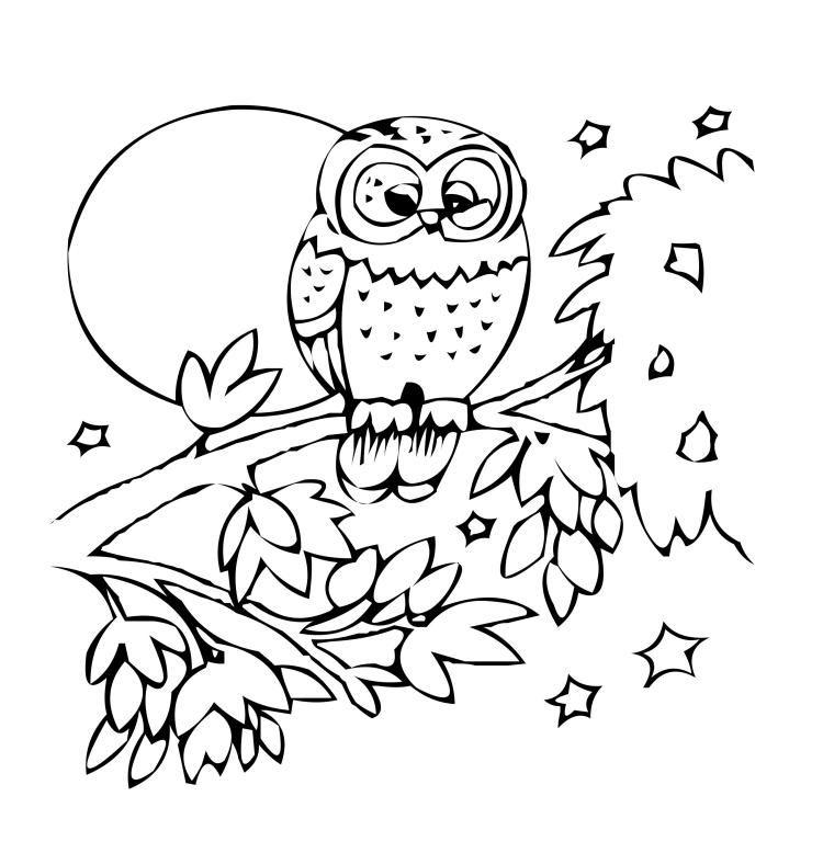 kindermalvorlagentiereeulebaum  owl pictures to color
