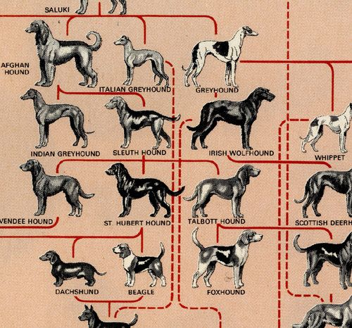 Dog Breed Family Tree Dog Breed Genealogy Family Dogs Breeds