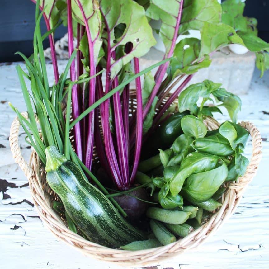 Ernte Aus Dem Eigenen Garten Garden Wild Zucchini