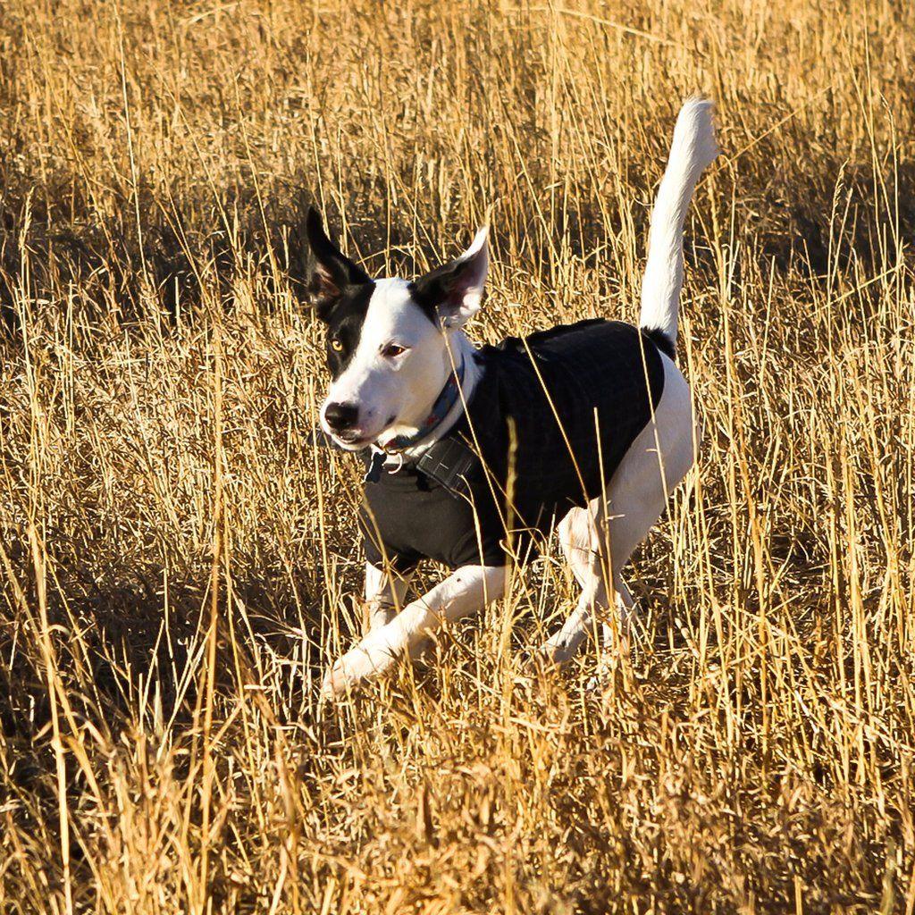 The Metro Dog Activities Dog Jacket Dog Bandana