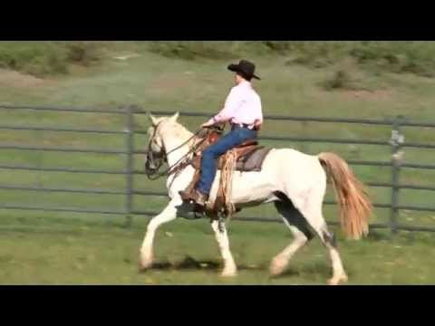 How To Fix Horse Rearing And Bolting With Pat Parelli With Images