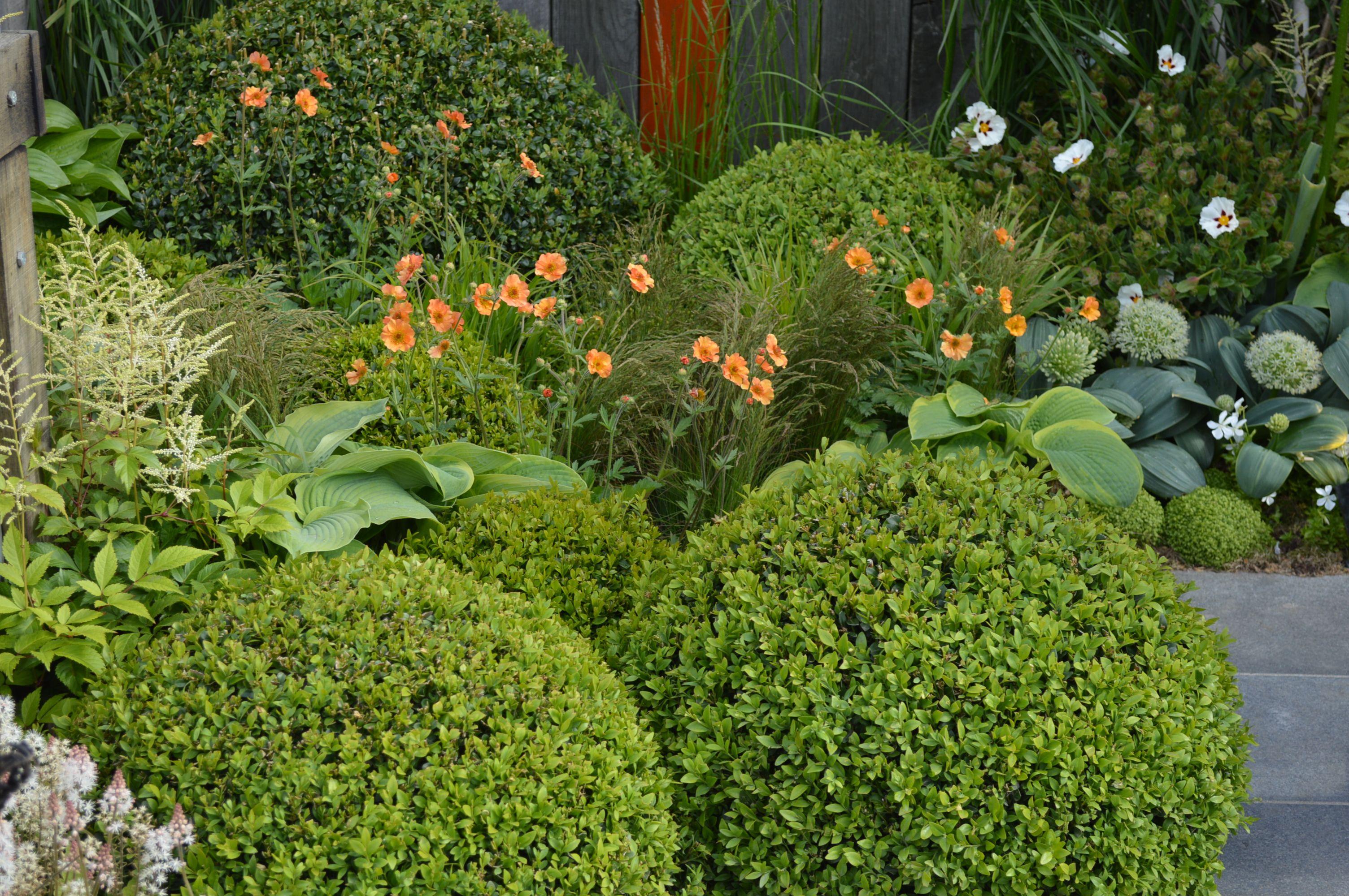 Design With Astilbe And Hosta Garden on hosta and daylily garden, hosta and hydrangea garden, hosta and caladium garden, hosta garden plans blueprints,