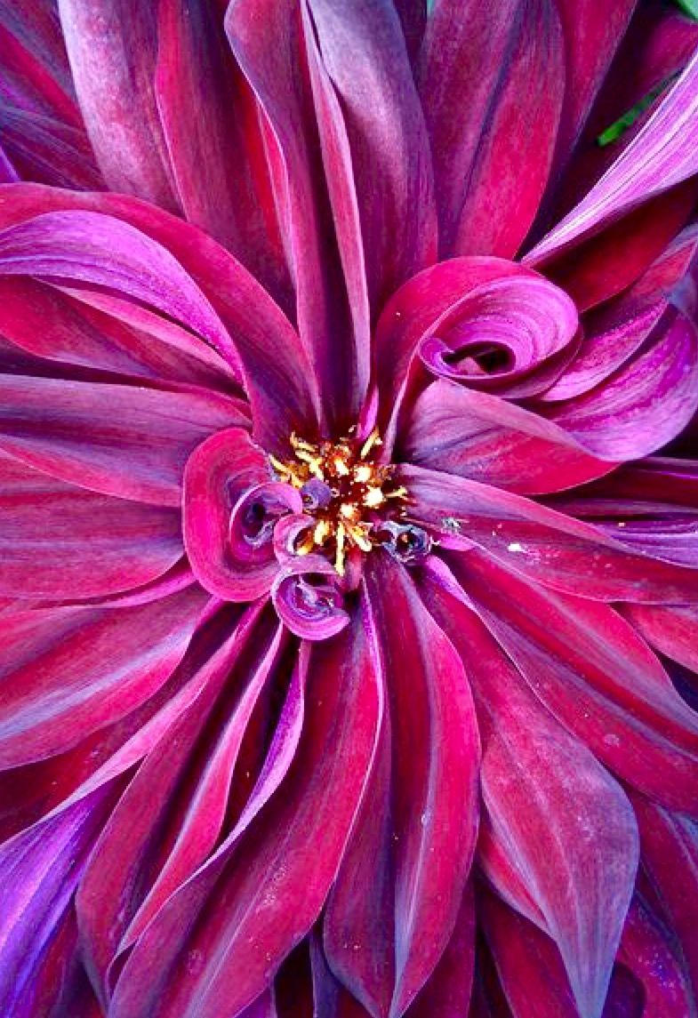 Pin by Gail Steven on Orchid | Pinterest | Violets, Color boards and ...