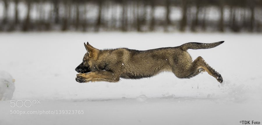 Flying puppy by tdkherskind. @go4fotos