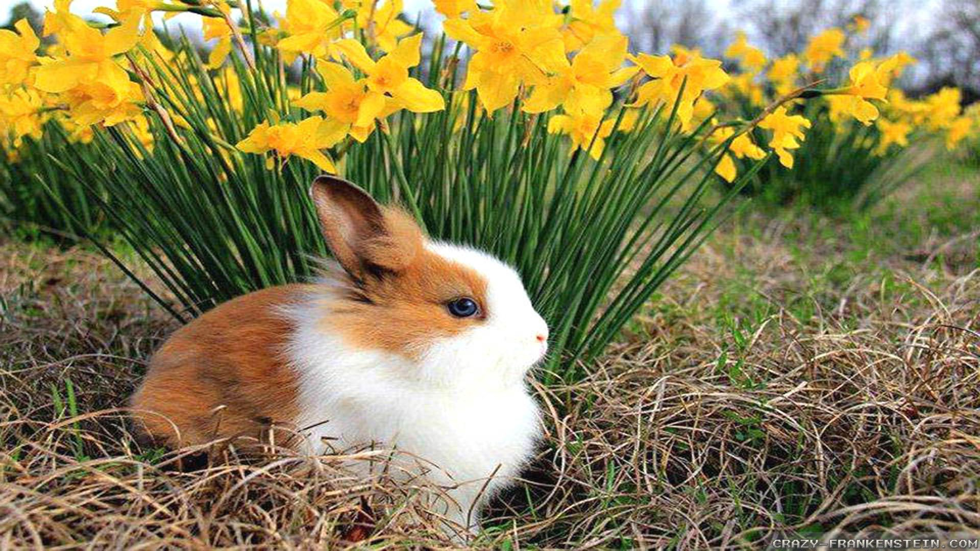 Spring Animal Pictures