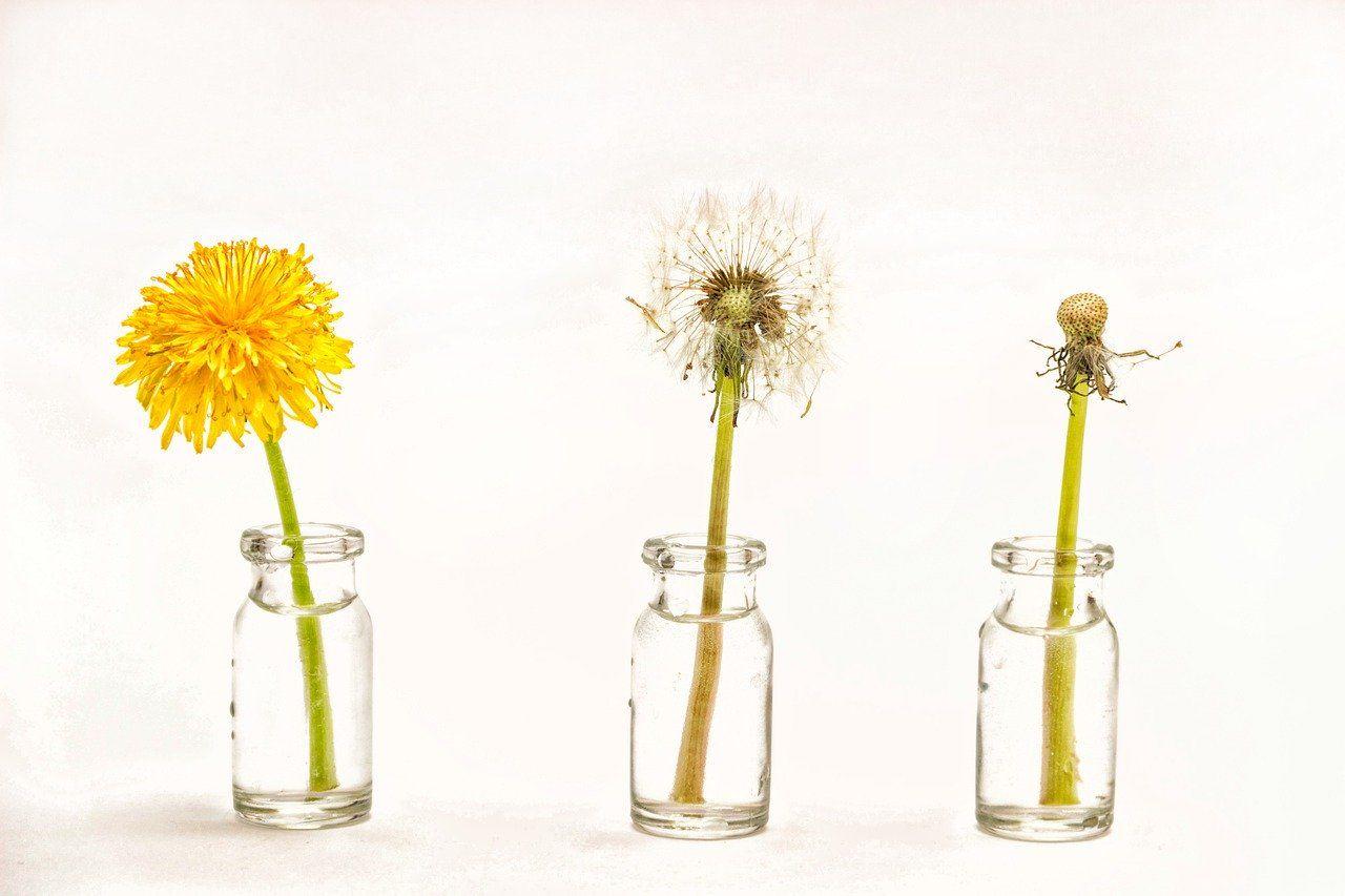 Free Image On Pixabay Dandelion Flower Seeds Spring In 2020 Dandelion Flower Flower Seeds Flowers