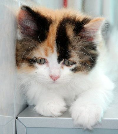 Kitten Pretty Cats Cats Cute Animals