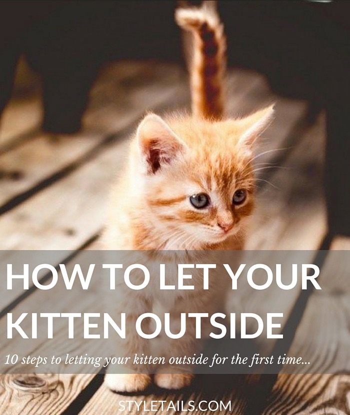 How And When To Let Your Kitten Outside For The First Time Kittens Cats Outside The Outsiders
