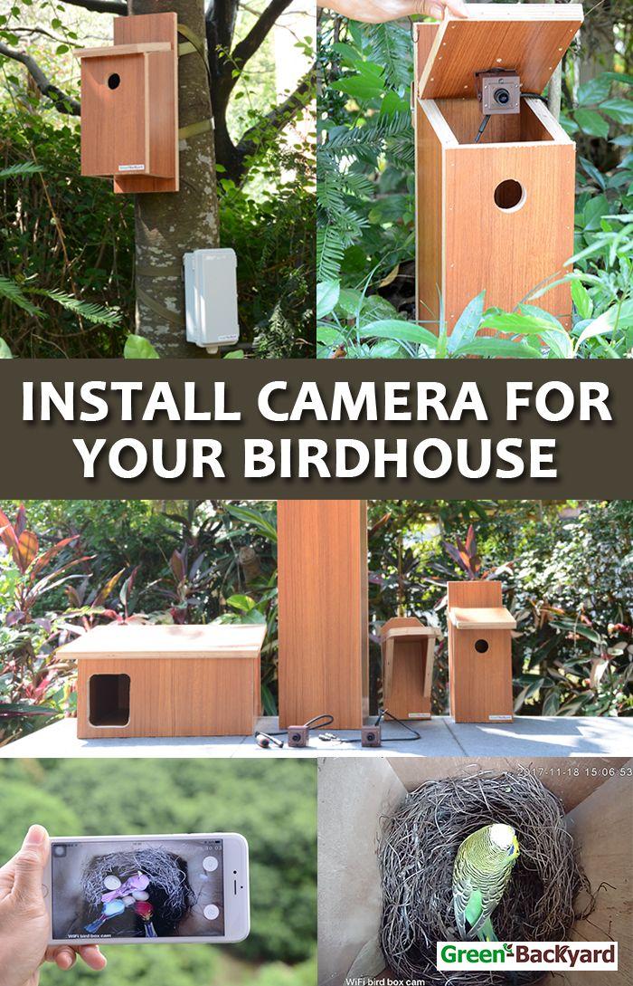 How To Install Wireless Bird Box Camera With Mobile Phone Green Backyard Bird Box Camera Bird Boxes Green Backyard