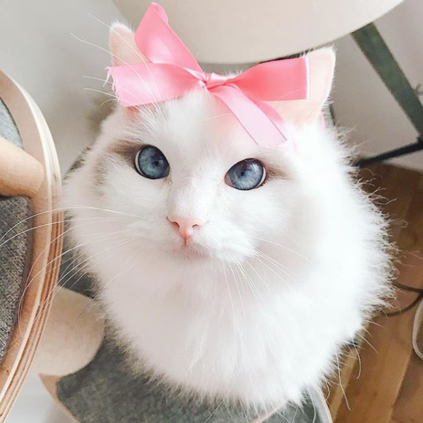 Cute Cat Trend Animals Pet Lovers With Images Pet Insurance