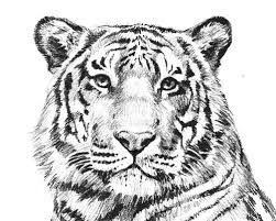 Endangered Animals Species List Kids Coloring Pages Free Colouring