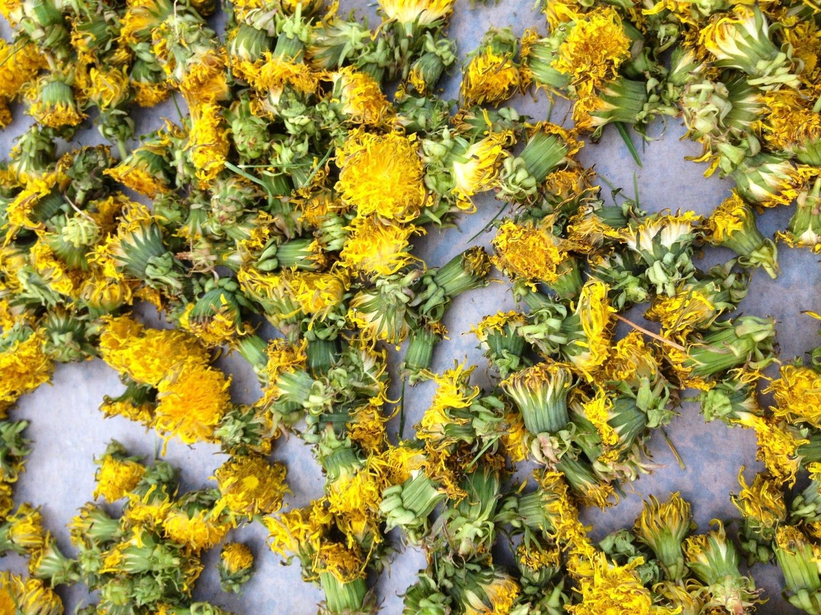 Perfect Drying Dandelion Flowers For Tea And Description In 2020 Dandelion Flower Dried Flowers Dandelion