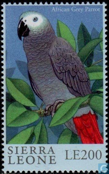 Sierra Leona 2000 - El Loro Gris, también conocido como Loro Gris de Cola Roja o Yaco, es una especie de ave psitaciformes que pertenece a la familia Psittacidae. Es la única especie del género monotípico Psittacus, y uno de los loros que viven en África