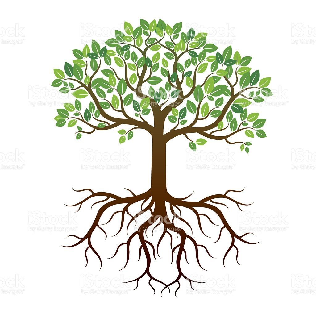 Image result for trees with leaves branches roots and trunk for ...
