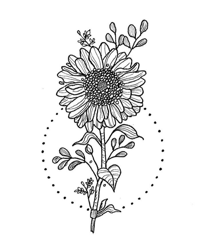 The Sunflower Is Yellow Coloring Page Tracing Twisty Noodle