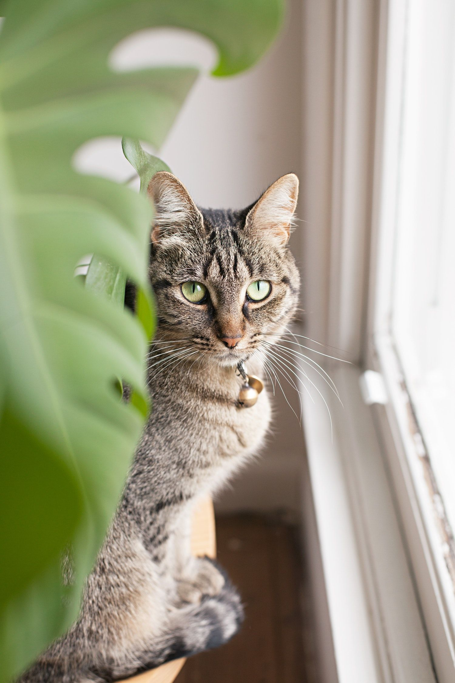 7 Common Houseplants That Can Make Your Pets Quite Sick Cat Safe Plants Toxic Plants For Cats Cat Plants