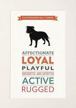 Staffordshire Bull Terrier Breed Traits Print Staffy Dog