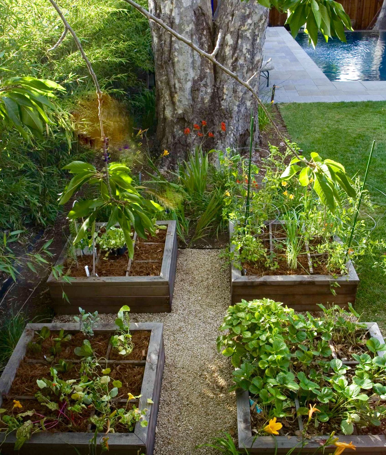 Pin by Fay F on Gardening | Garden layout, Backyard ...