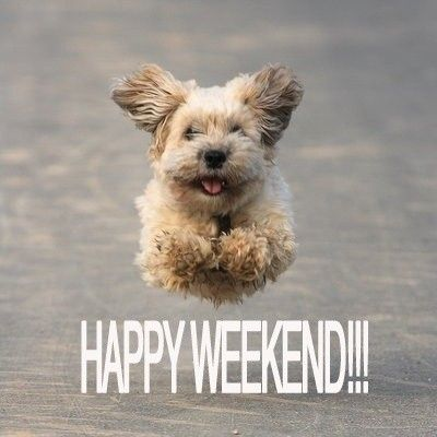 Image result for happy weekend animal images