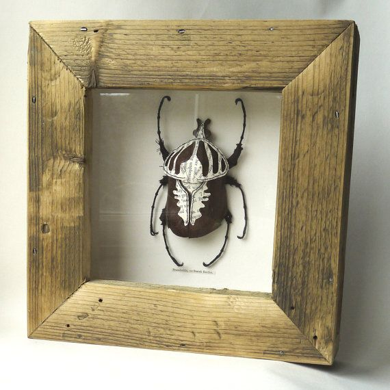 Etsy listing at https://www.etsy.com/listing/242697276/framed-goliath-beetle-recycled-paper-and