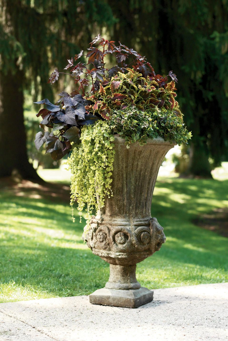 Foliage Fantasy in a garden urn by Proven Winners. 1 Maple Sugar hibiscus, 1 Black Heart sweet potato vine, 1 Goldilocks creeping jenny, 1 Dark Dancer White Clover, 1 Sky Fire Coleus