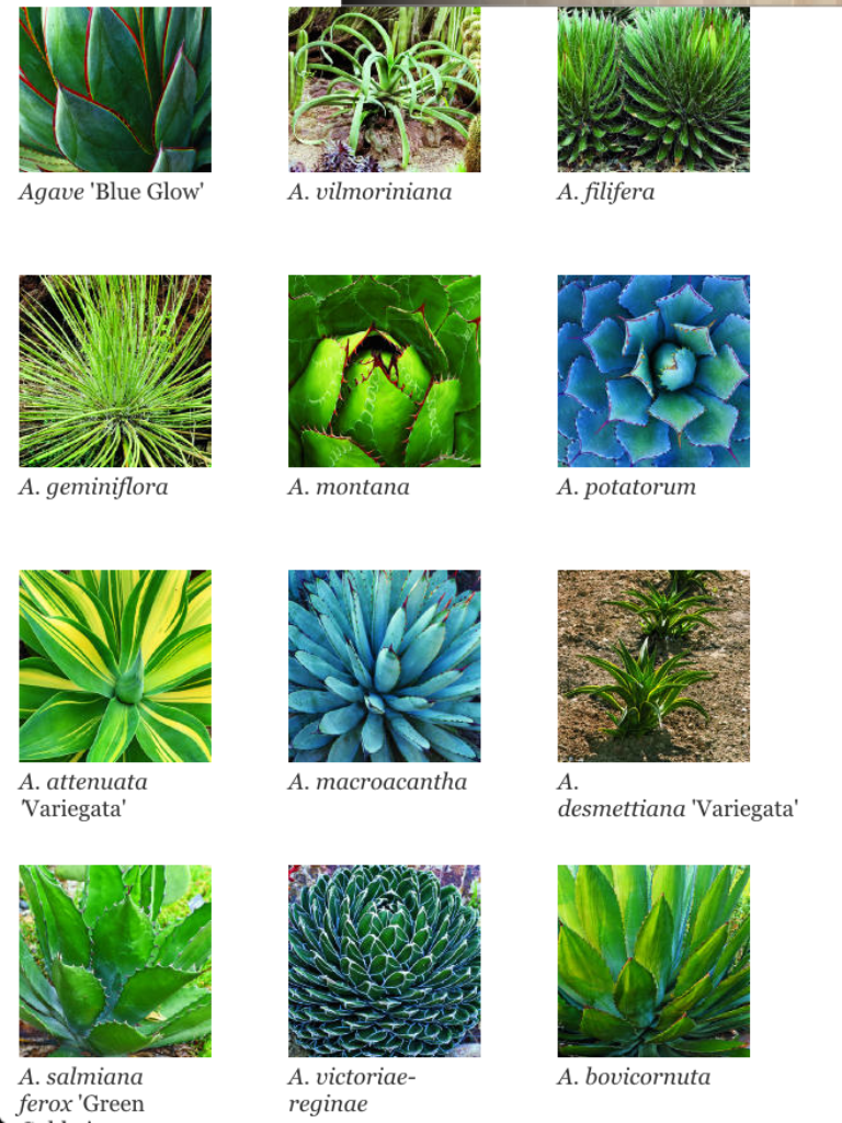 How To Identify Different Types Of Succulents Part I Echeveria Sempervivum And Aeonium Types Of Succulents Plants Types Of Succulents Planting Succulents