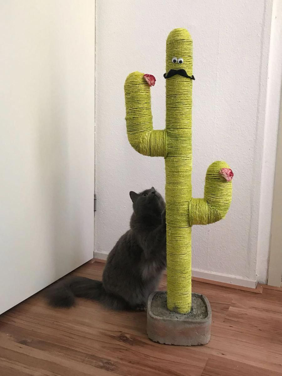 CatsJumping ScratchingPostForCats Cat scratching post
